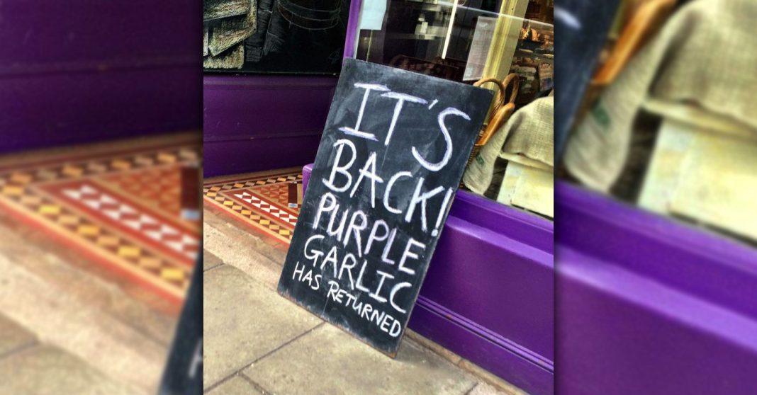 Purple garlic is back